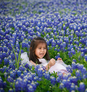 tx blue bonnets-73